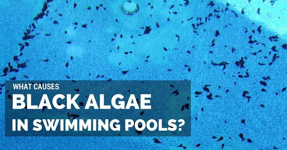 What-Causes-Black-Algae-in-Swimming-Pools