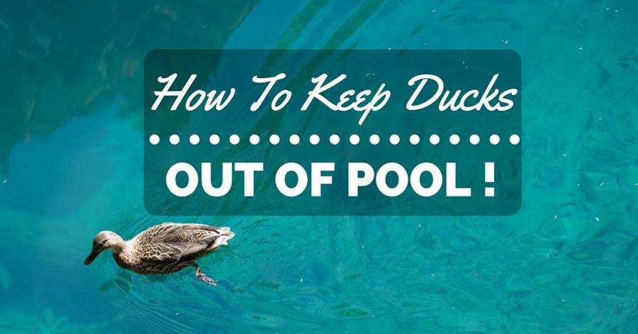 How To Keep Ducks Out Of Pool And Make Them Quack We Re Out