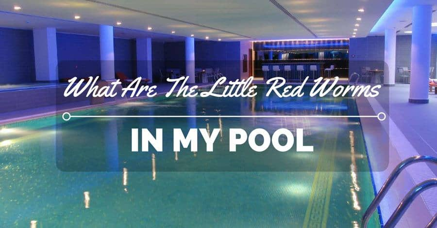 What are the little red worms in my pool the rex garden for Name something you might find in a swimming pool