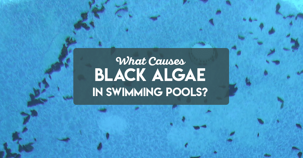 what causes black algae in swimming pools