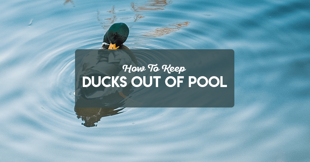 how to keep ducks out of pool