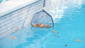 clean and treat pool regularly