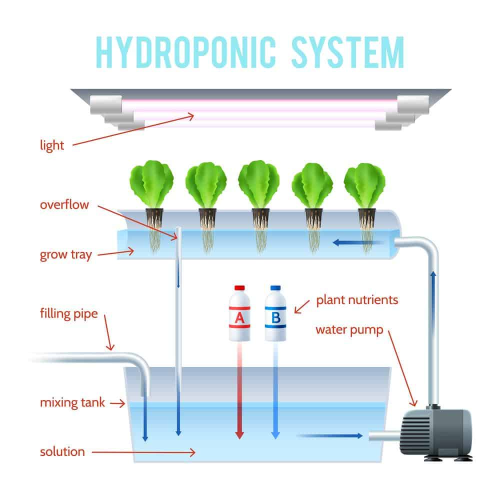 Key Factors for Choosing Hydroponic System