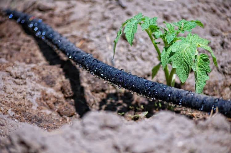 Drip irrigation is a dependable system