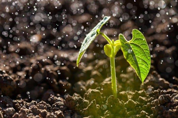 Healthier plants