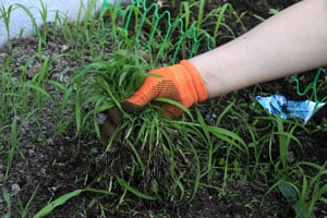 Prevent Weeds from Spreading Throughout Your Garden