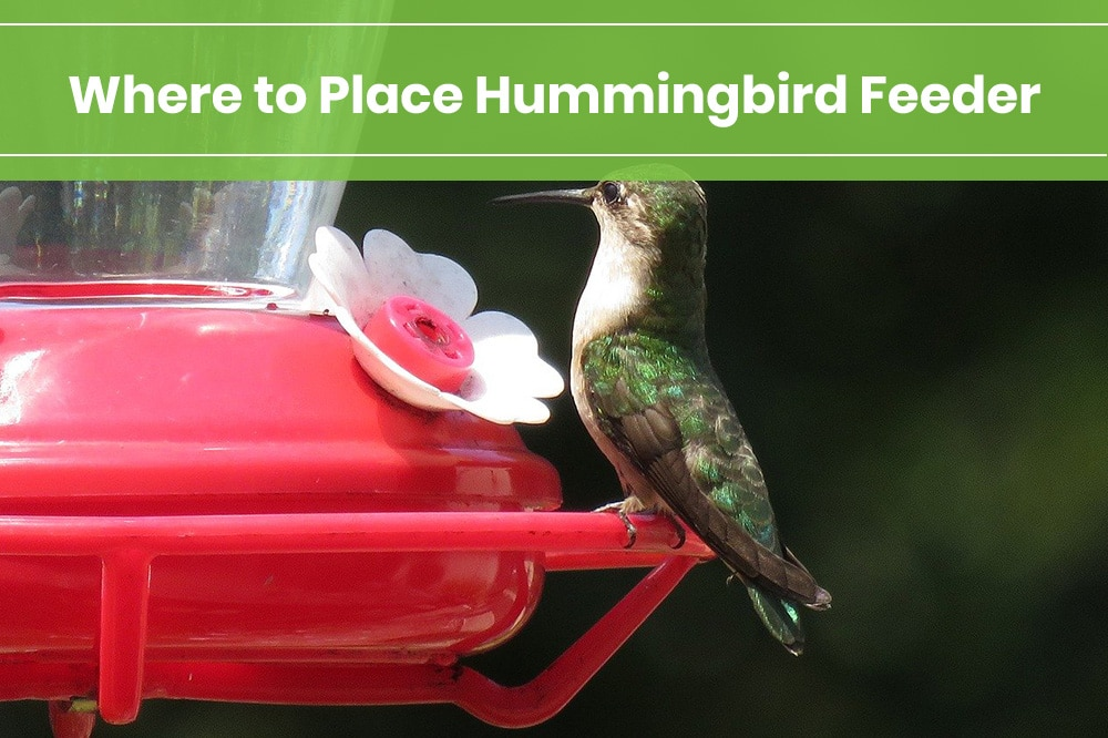 where to place hummingbird feeder